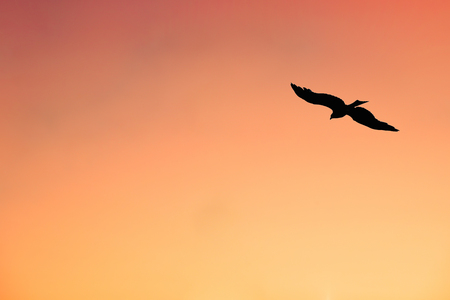 An Isolated Eagle Hovering Across the Sky at Sunset Stock Photo