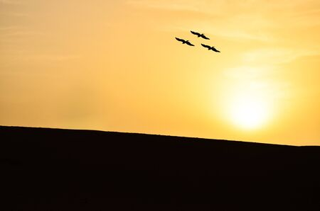 Silhouette of a Convocation of Eagles Hovering Over Sand Dunes in the Sahara