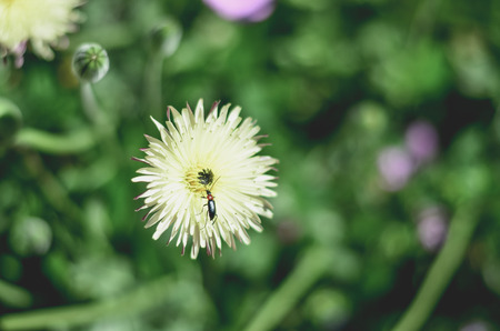 Close-Up of an Insect Landing on a Flower