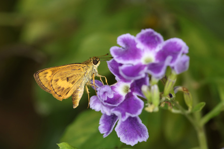 moth: Moth and yellow flower