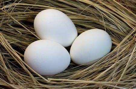 Eggs of white colour in a nest photo
