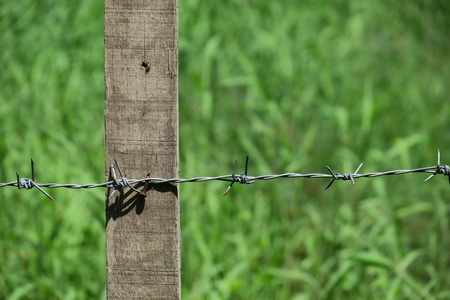 Barbed wire on wood fence against green field