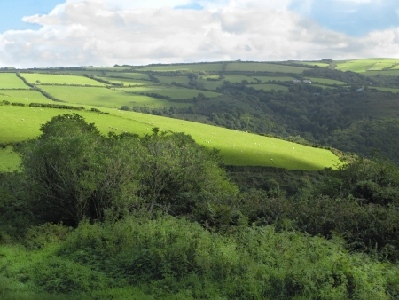 enclosures: North Devon Fields and Sheep