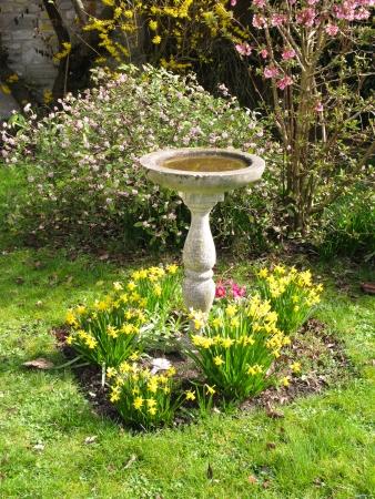 Birdbath photo