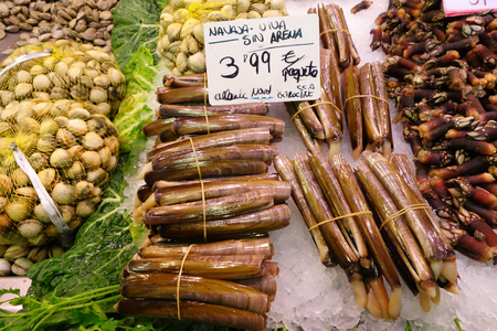 Spanish Razor clams photo