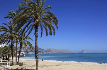 costa blanca: Palms and Beach Costa Blanca Spain