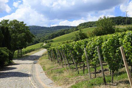 eec: Vineyard in Germany Stock Photo