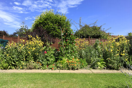 Evening Primrose in an English Country garden photo