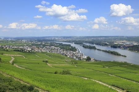 rudesheim: Vineyards in the River Rhine Valley Germany Stock Photo