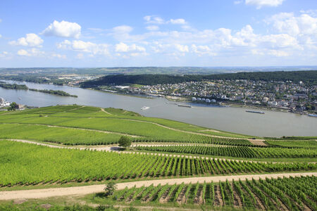 eec: Vineyards on The Rhine River valley Germany