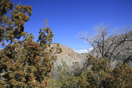 rocky mountain juniper: New Mexicos high desert wilderness of trees and mountains Stock Photo