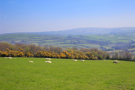 exmoor: Exmoor farmland England Stock Photo