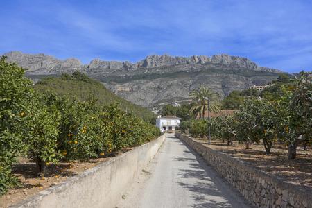 altea: Orange Trees and mountains Spain Stock Photo