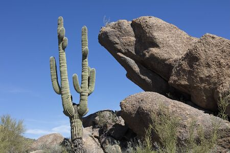 sonoran desert: Huge Boulders and giant Saguaro cactus litter the Sonoran Desert landscape Stock Photo