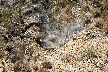 arachnids: A spider has spun a trap on the ground in the Sonoran Desert of the Southwestern USA Stock Photo