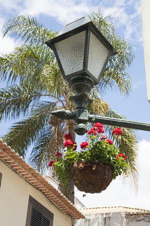 hanging basket: European street lamp and hanging basket of flowers