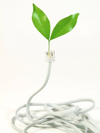 Telephone cable with leaf on plug Stock Photo