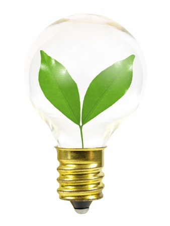 Small light bulb with leaves photo