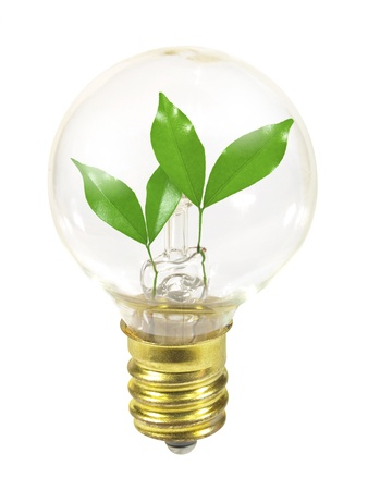 Small light bulb with sprouts