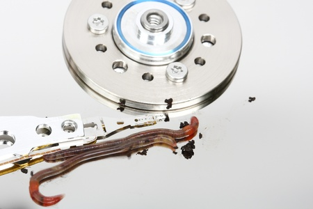 computer worm or virus in hard disk photo