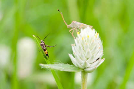 2 bugs on the Amaranth flower photo