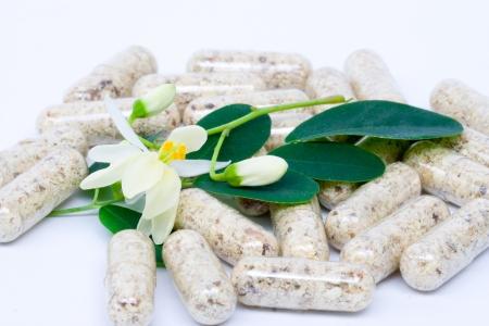 mlonge: fiori, foglie e capsula di Moringa su bianco