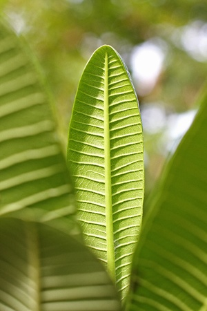 Branch with green leaves close-up Stock Photo - 20819256