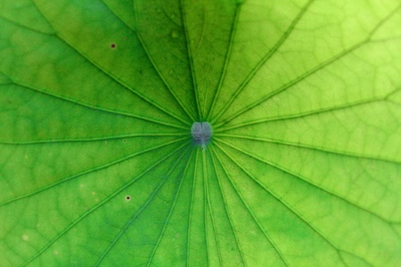 green leaf Stock Photo - 20819618
