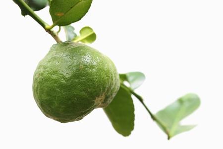 grapefruit citrus ripen on white background Stock Photo - 21191642