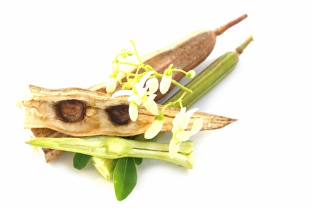Bitter cucumber-chinese (Moringa oleifera Lam.) photo