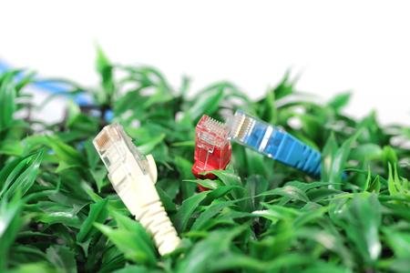 utp: UTP lan cable on green grass