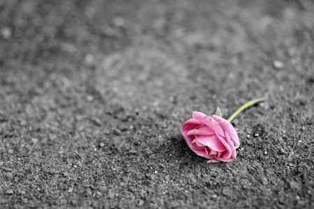 Pink roses on the floor photo