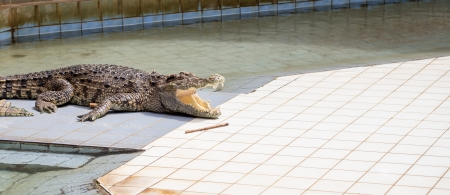 siamensis: crocodile Stock Photo