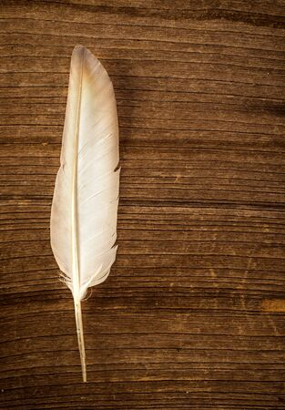 exempt: Feather on wood