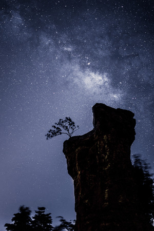 vulpecula: Silhouette of Tree with cloud and Milky Way. Long exposure