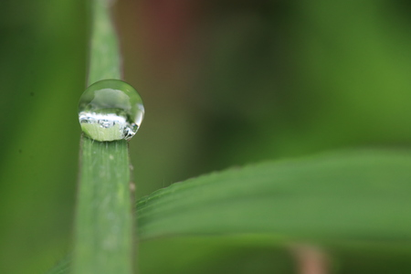 Macro of dew drop on grass leaf 스톡 콘텐츠