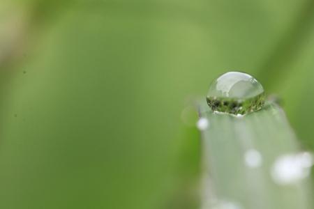 Rain drops on grass leaf in the grass field