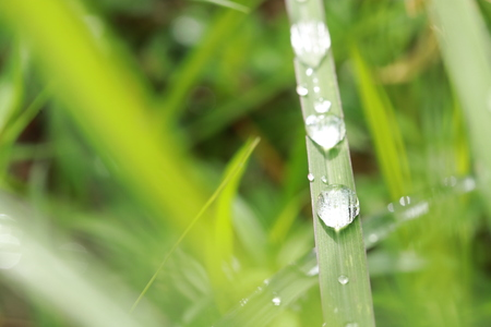 Close up rain drops on grass leaf in grass field 스톡 콘텐츠