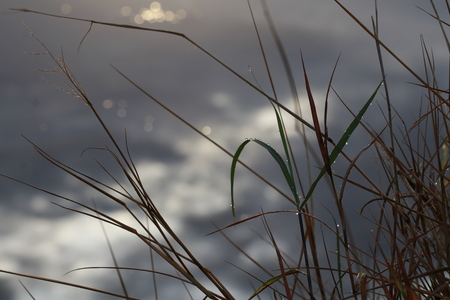 Close up grass field on clouds sky background