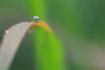 Macro of dew on grass leaf in the garden 스톡 콘텐츠