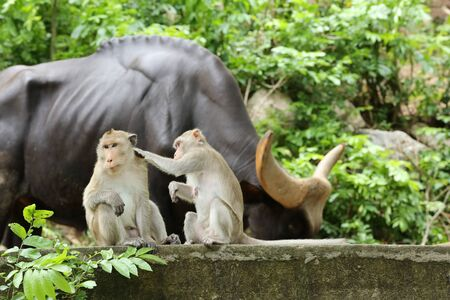 loveliness: Loveliness of monkey Stock Photo