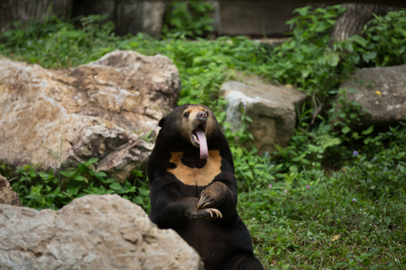 face to face: Cheeky face of bear
