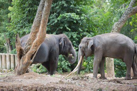 animalia: Friendship of Elephants Stock Photo