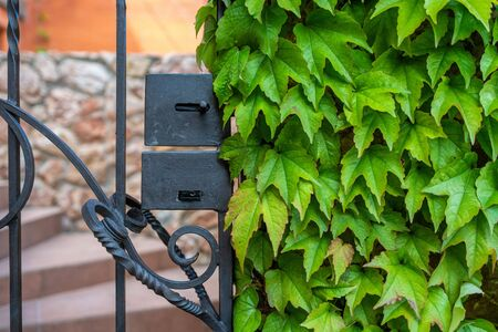 Green leaves of a climbing plant of wild grapes around a black metal door, a wicket fence against a pink marble stone wall, on a sunny day spring cottage rest beauty
