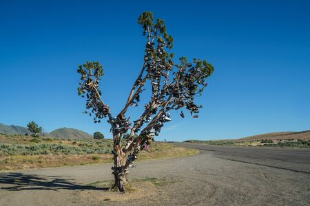 Shoe Tree on Highway 395, south of Susanville California, 30 miles north of Reno, Nevada. Stock Photo