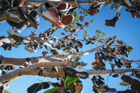 Shoe Tree at Hallelujah Junction on Highway 395, south of Susanville, California, north of Reno, Nevada. Stock Photo