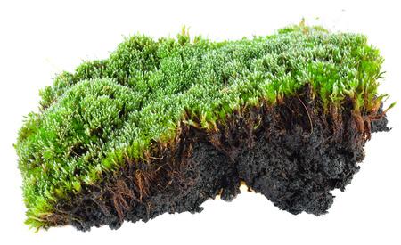 白い背景の上の苔の緑 写真素材