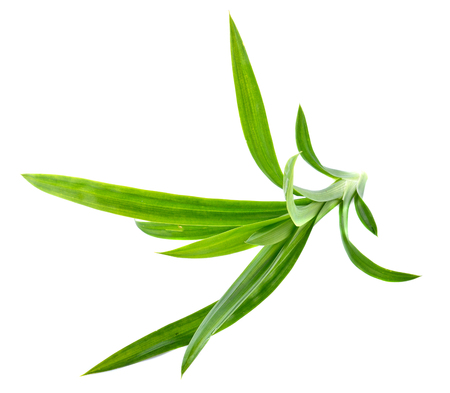 tectorius: Fresh Pandan leaves isolated on white background