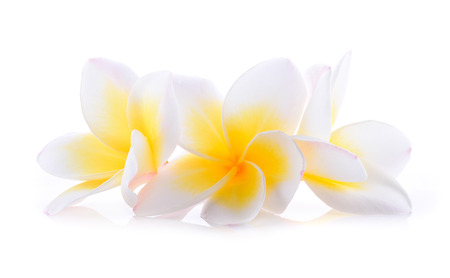 companions: Frangipani three companions on a white background. Stock Photo