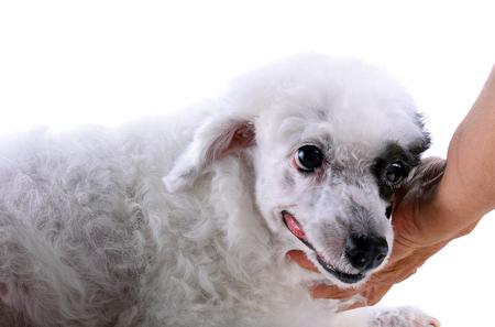 sitter: Cute dogs prone Stock Photo
